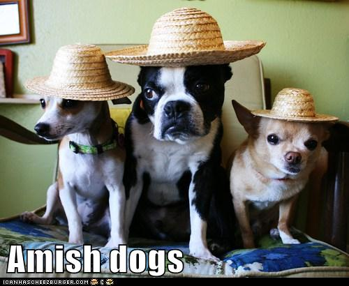 Amish dogs - I Has A Hotdog - Dog Pictures - Funny pictures of dogs
