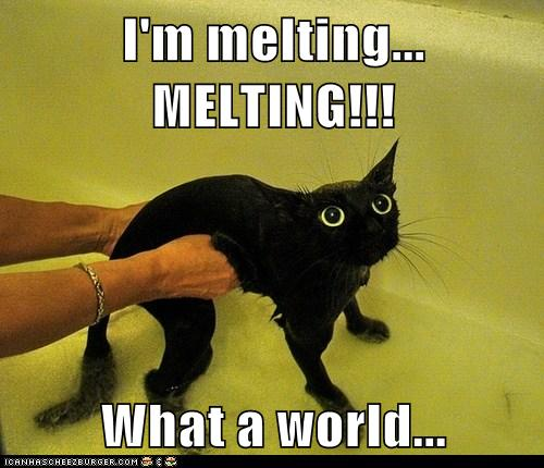 I M Melting Melting What A World Lolcats Lol