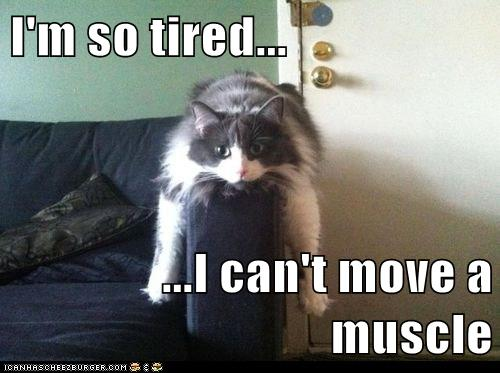 im  tired lolcats lol cat memes funny cats funny cat pictures  words