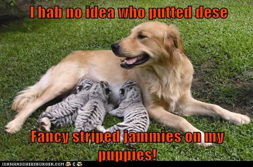 Animal Comedy Funny Dog Animal Comedy Animal Comedy