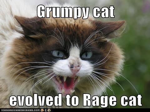 Grumpy Cat Evolved To Rage Cat Lolcats Lol Cat Memes