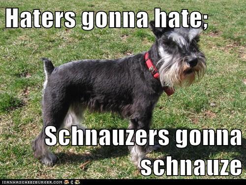 Haters Gonna Hate Schnauzers Gonna Schnauze Cheezburger