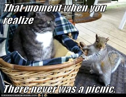 I do not Like This Picnic! Not... One.. Bit! - Lolcats ...
