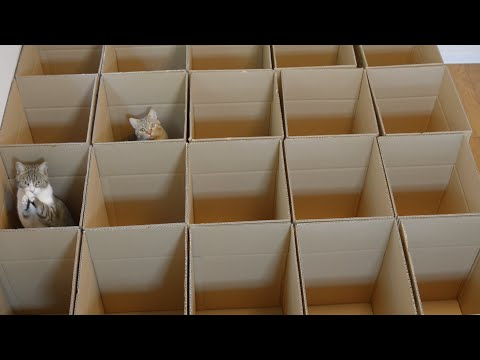 Of Course Nine Cats Would Love All These Boxes