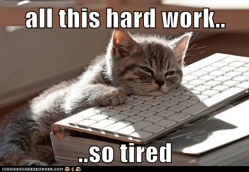 hard work  tired lolcats lol cat memes funny cats funny cat pictures