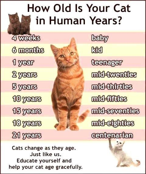 how old is your cat in human years lolcats lol cat memes funny cats funny cat. Black Bedroom Furniture Sets. Home Design Ideas