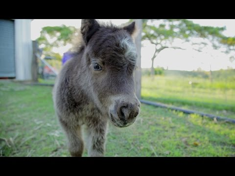 This Miniature Horse Sure Has a Lot of Energy
