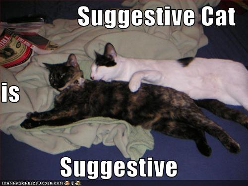 Suggestive Cat Is Suggestive Cheezburger Funny Memes