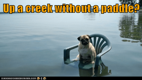 Up A Creek Without A Paddle Cheezburger Funny Memes
