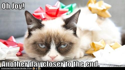 Oh Joy! Another day closer to the end. - Lolcats - lol | cat memes | funny  cats | funny cat pictures with words on them | funny pictures | lol cat  memes | lol cats