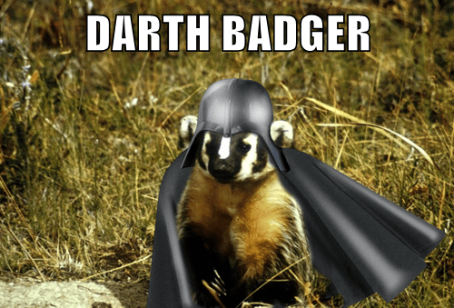 Darth Badger Cheezburger Funny Memes Funny Pictures
