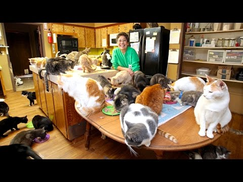 The Queen of the Cat Ladies Lives With 1,100 Cats and Runs a $1.6 Million Dollar Operation to Rescue and Care for Them