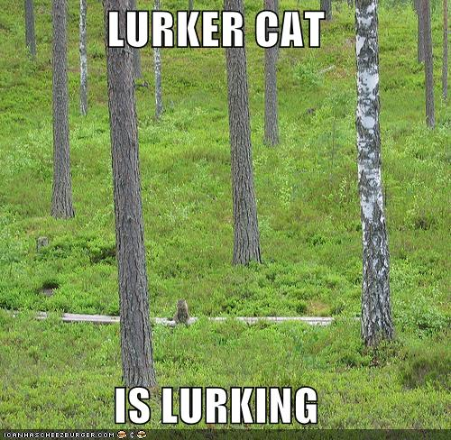 Lurker Cat Is Lurking Cheezburger Funny Memes Funny