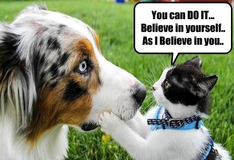 positive cat gives encouraging advice i has a hotdog dog