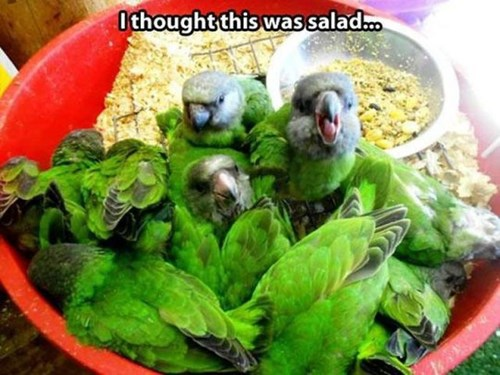 They Already Ate All the Lettuce