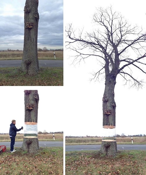 Now You See the Tree, Now You Don't