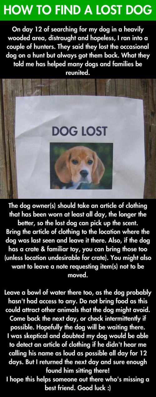 Public Service Announcement: How to Find a Lost Pet - WIN ...