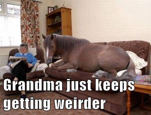 Grandma...That Isn't Our Great Dane...