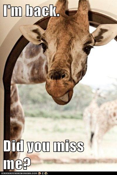 I'm back. Did you miss me? - Cheezburger - Funny Memes ...