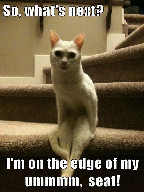So What S Next I M On The Edge Of My Ummmm Seat Lolcats