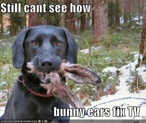 bunny ears for tv