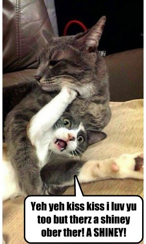 Shiny Trumps Kiss Kisses Lolcats Lol Cat Memes