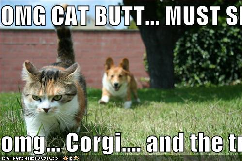 Omg Cat Butt Must Sniff Omg Corgi And The Tree