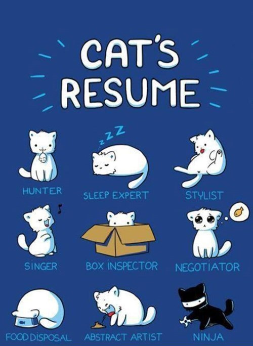 It's National Cat Day and We Want to Know if Your Cat is a Hard Worker! Prove it and Win a Prize!