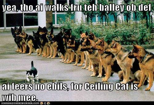Ceiling Cat is My Shepherd Through the Shepherds