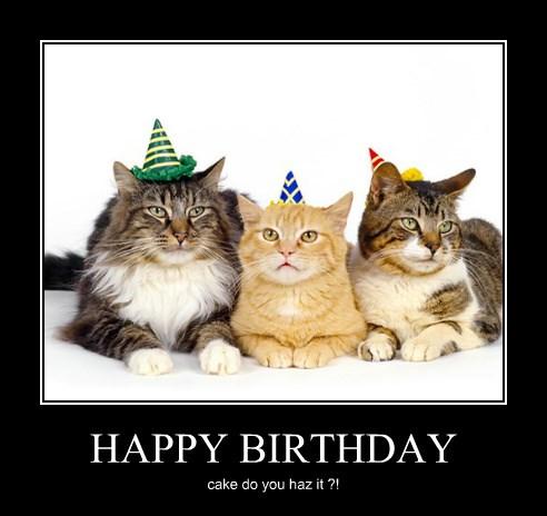 HAPPY BIRTHDAY - Lolcats - lol   cat memes   funny cats ...
