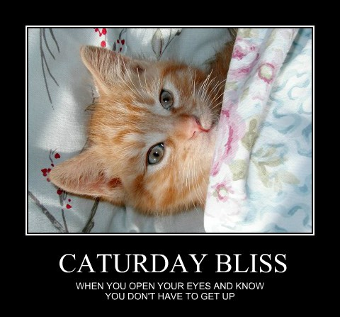 Caturday Should Be Everyday
