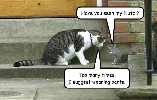 Sassy Cat Is On Patrol