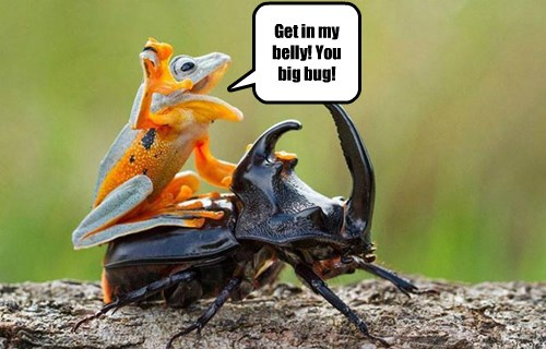 Get in my belly! You big bug!