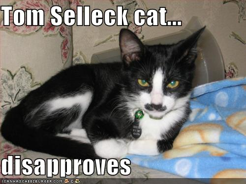 Tom Selleck Cat Disapproves Cheezburger Funny Memes Funny