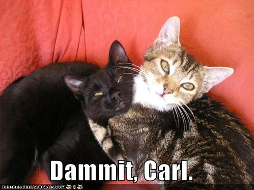 Dammit Carl Cheezburger Funny Memes Funny Pictures