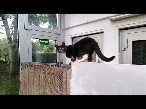 Little Cat Climbing