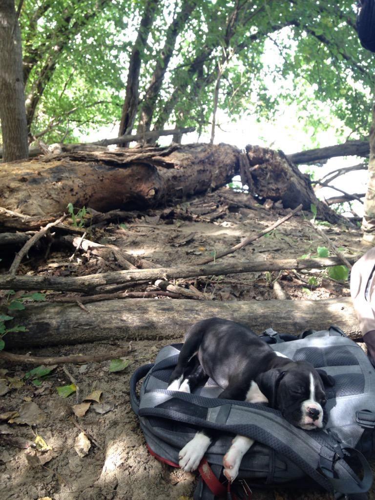 Sleepy hiking pup