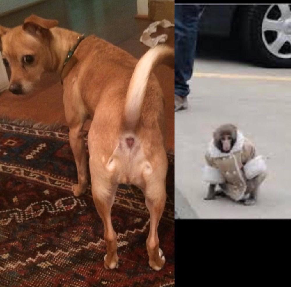this dog u0026 39 s butt looks like the ikea monkey