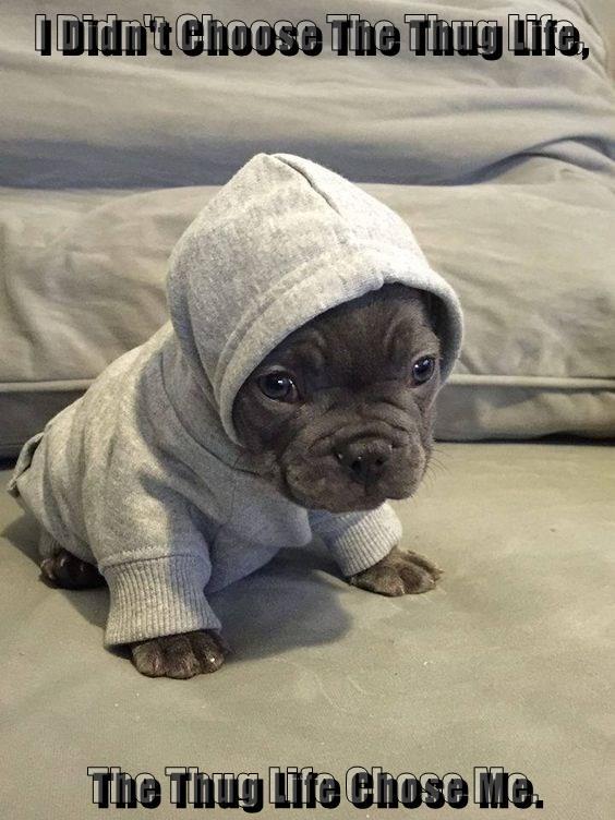 Pitbull love   Cute animals, Pets, Puppies