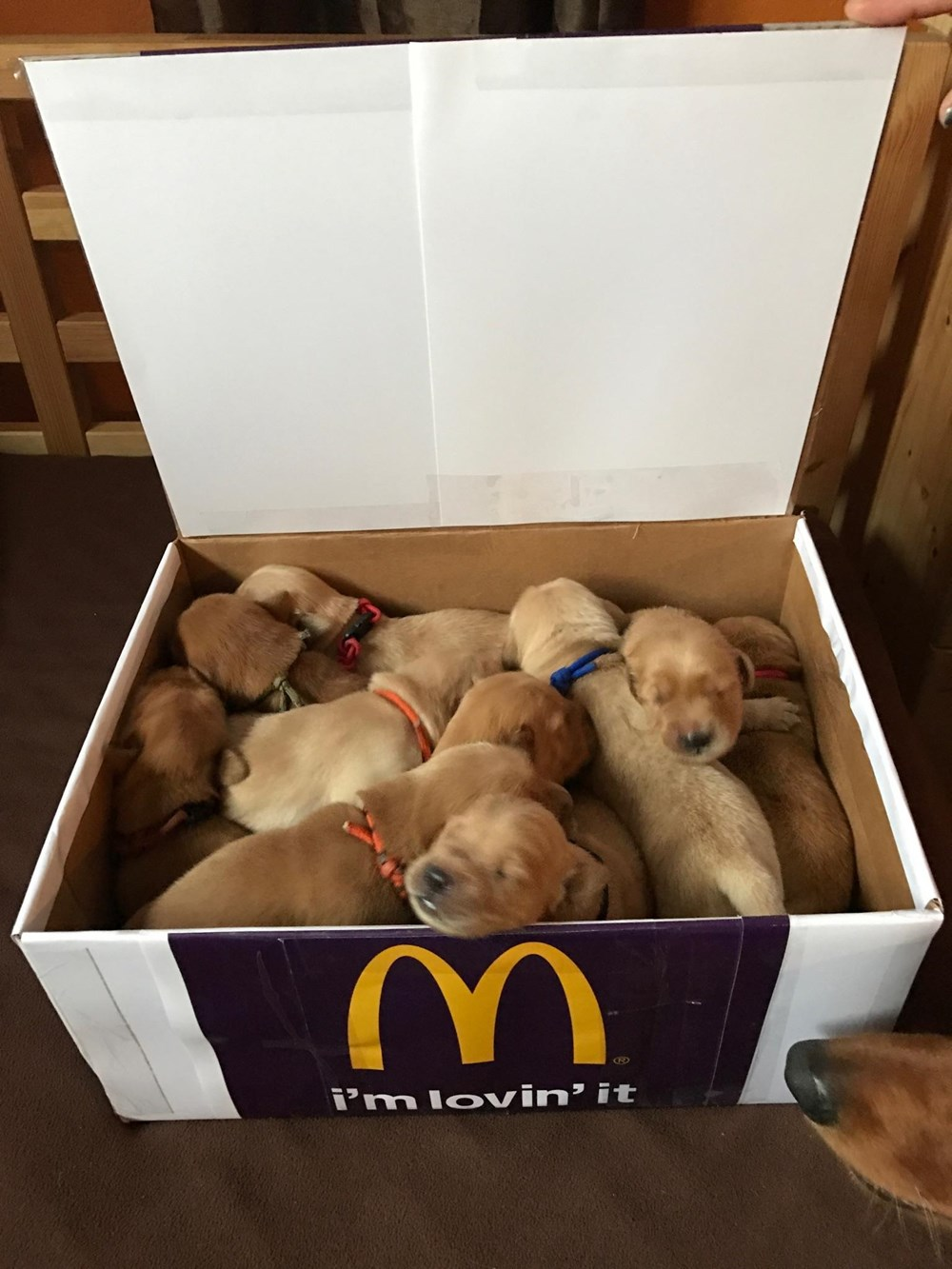 10 Piece Ultimate Brush Collection: 10 Piece Puppy McNuggets