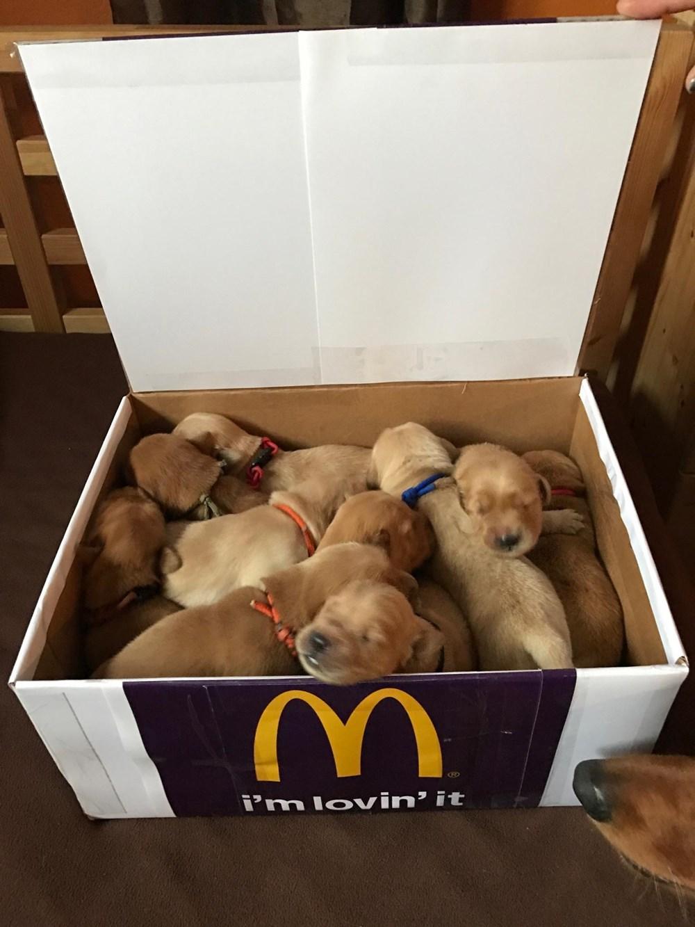 10 Piece Puppy McNuggets