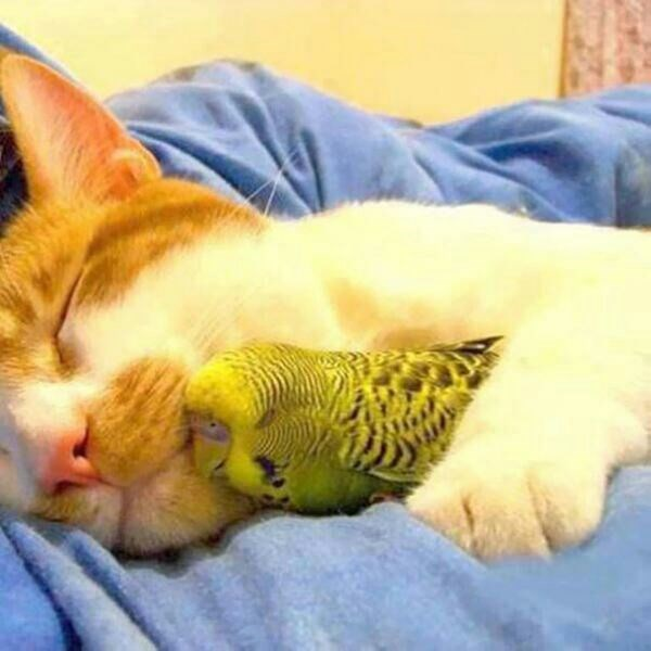 Can I Cuddle With You: 19 Unlikely Animal Cuddle Buddies That Are Too Cute For