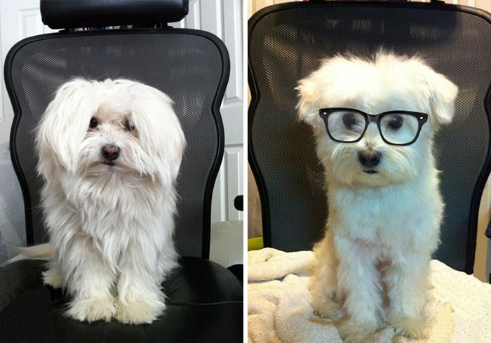 these puppers pictures before and after their haircuts are