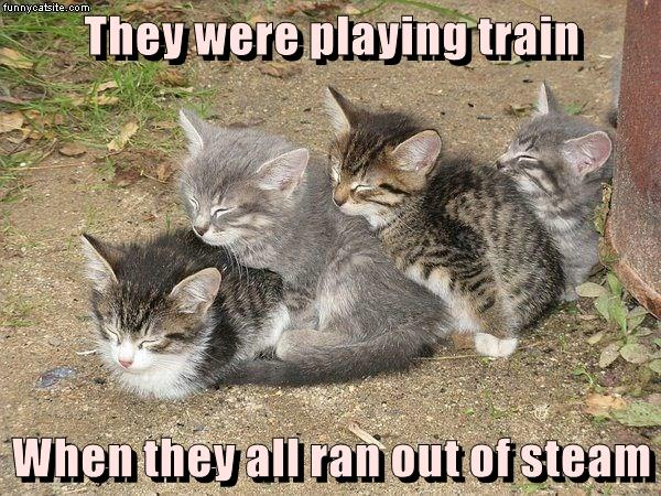 they were playing train when they all ran out of steam i can has cheezburger cheezburger