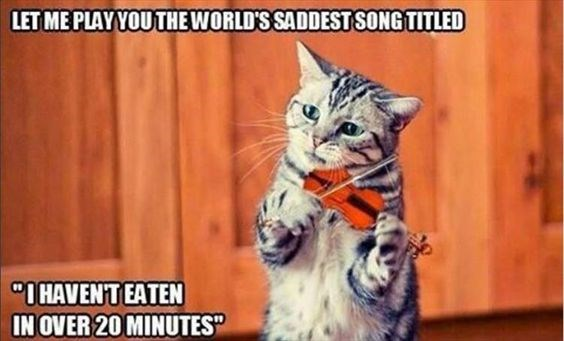 Hilarious Musical Animals I Can Has Cheezburger Funny