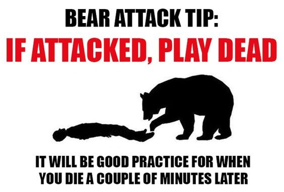 just in case you run into a bear i can has