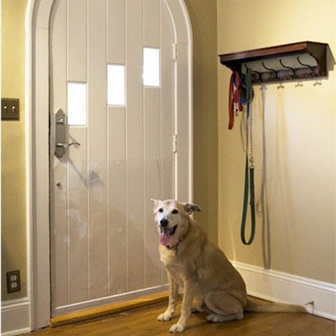 9 Tips For Keeping Your House Clean With Pets I Can Has