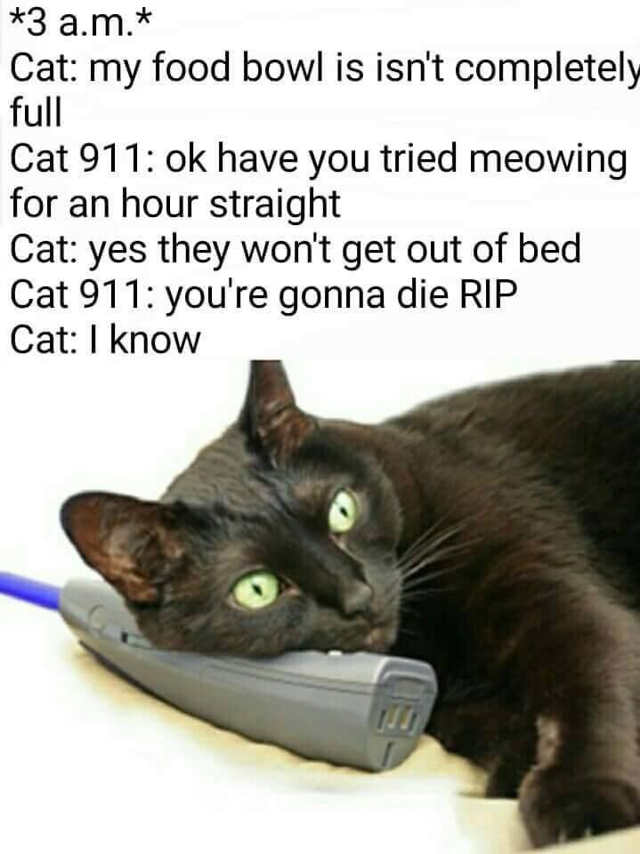cat kneads me