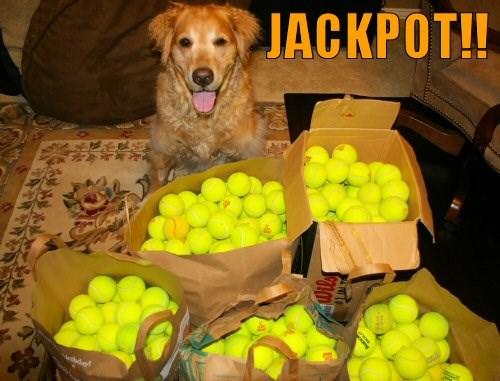 Dogs Vs. Tennis Ball (15 Photos) - I Can Has Cheezburger ...