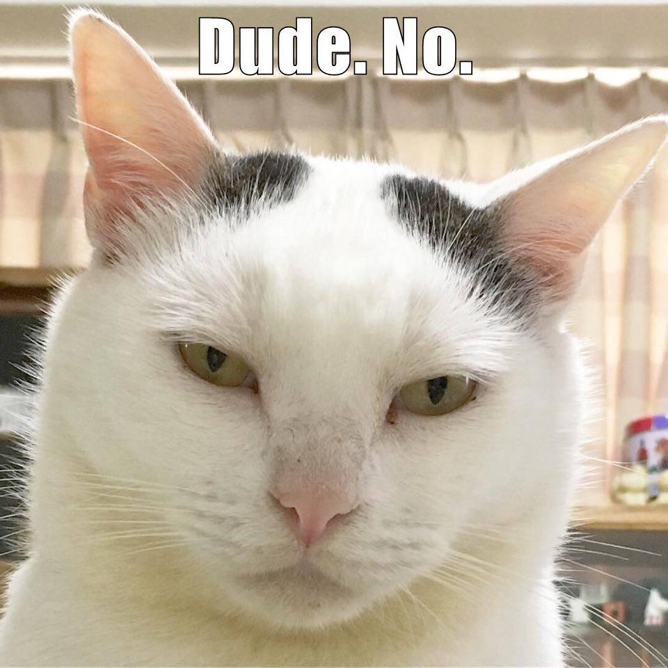 Dude. No. - Lolcats - lol   cat memes   funny cats   funny ...